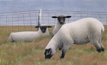 Three Sheep, 1954